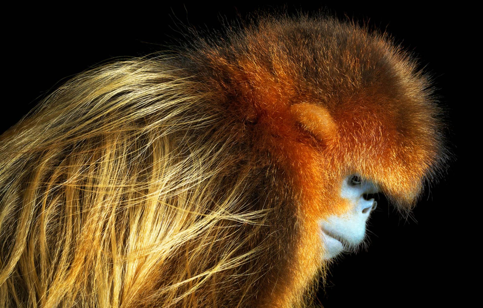 En Peligro De Extinción: El Fotógrafo Que Retrata Animales En Peligro De